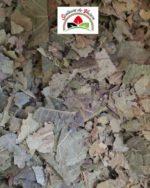 Noyer feuilles