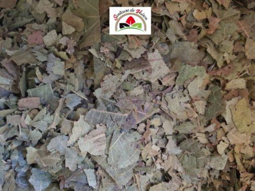 feuilles de noyer coupées