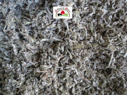 feuilles de sauge coupée pour infusion et cuisine