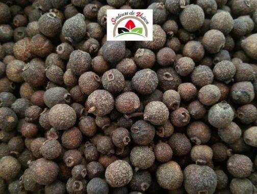 poivre de jamaïque en grains